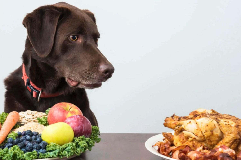 homemade dog food recipes vegan