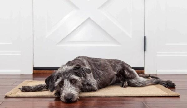 dog sleeping on the floor