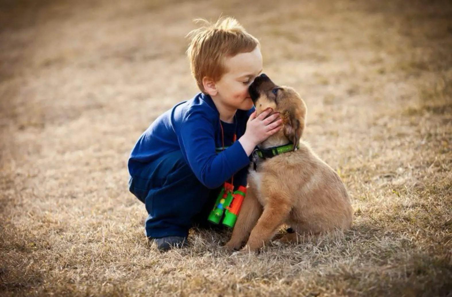 dog training positive reinforcement