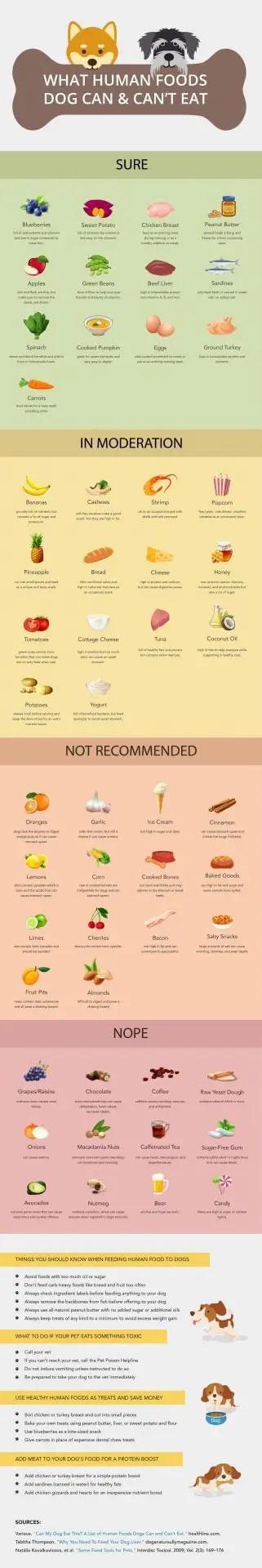 Homemade Vegan Dog Food Guide [+ 6 Recipes] 1