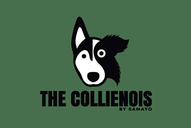 Come Educare & Addestrare Un Cucciolo Di Cane Nel 2019 87