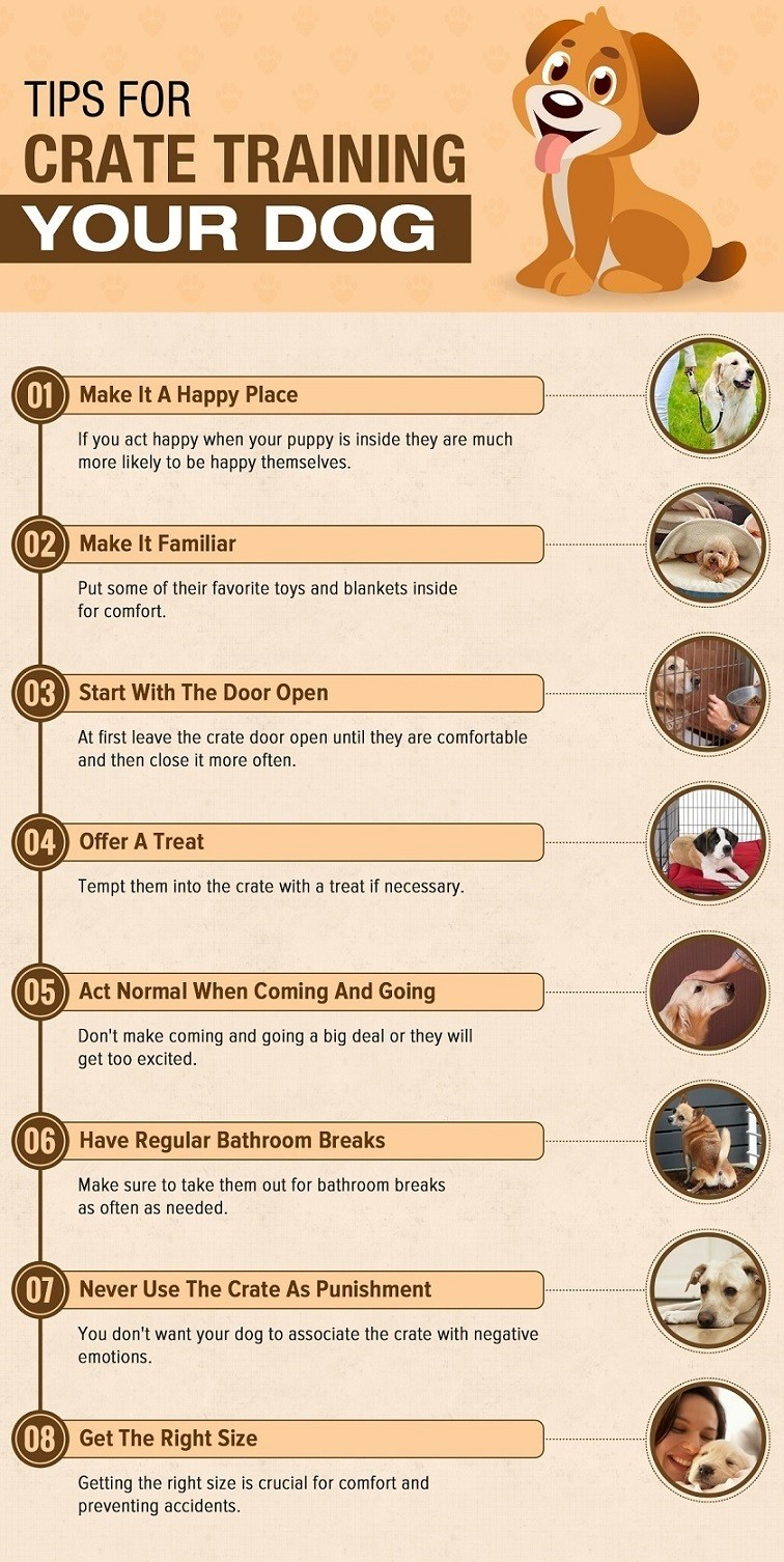 Training A Puppy 101 | Teach Your New Dog The Basics 41