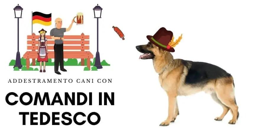 Educazione & Addestramento Cani in Italia 2020 [INFOGRAFICA]