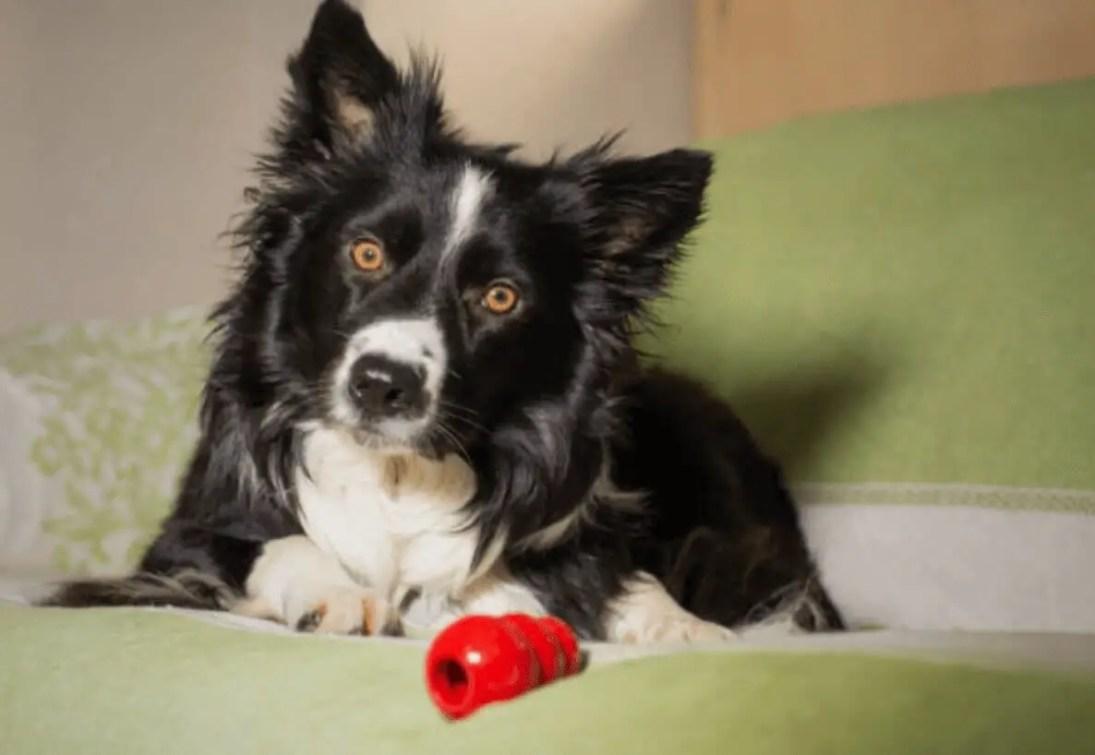 6 miglior Giocattolo interattivo per cani kong 2020