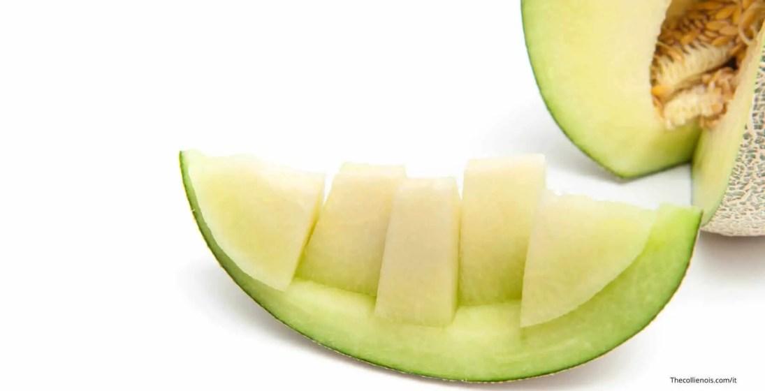 Si può dare il melone ai cani - i cani possono mangiare il melone (8)-1