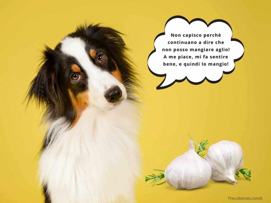Si può dare l'aglio ai cani - l'aglio è tossico per la salute del cane - i cani possono mangiare l'aglio 1