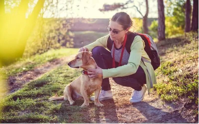 Zecca del cane - controllare il cane se è stato morso da una zecca