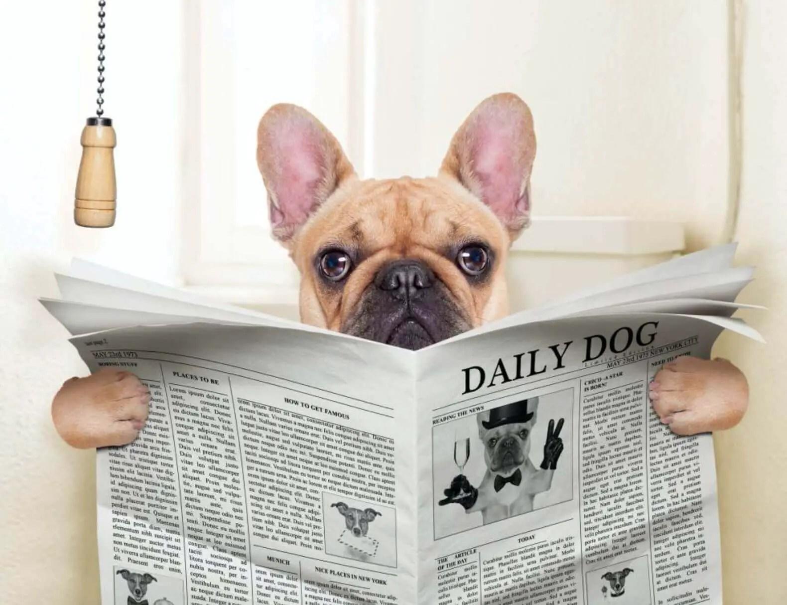 la Guida sulla diarrea nel cane, sintomi, cura, rimedi naturali, cosa fare, cosa non fare, e molto altro ancora11