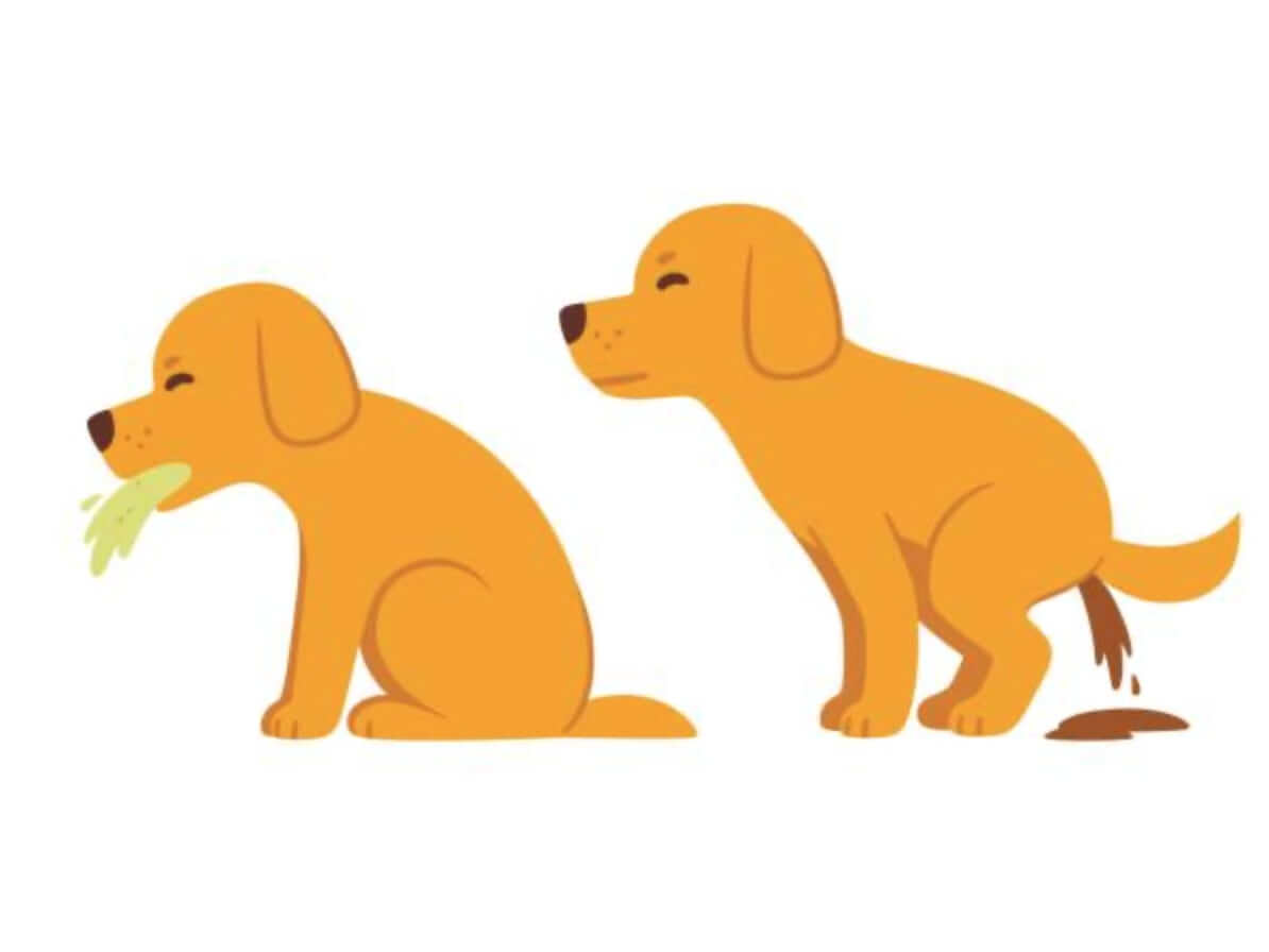 la Guida sulla diarrea nel cane, sintomi, cura, rimedi naturali, cosa fare, cosa non fare - diarrea del cane con il muco