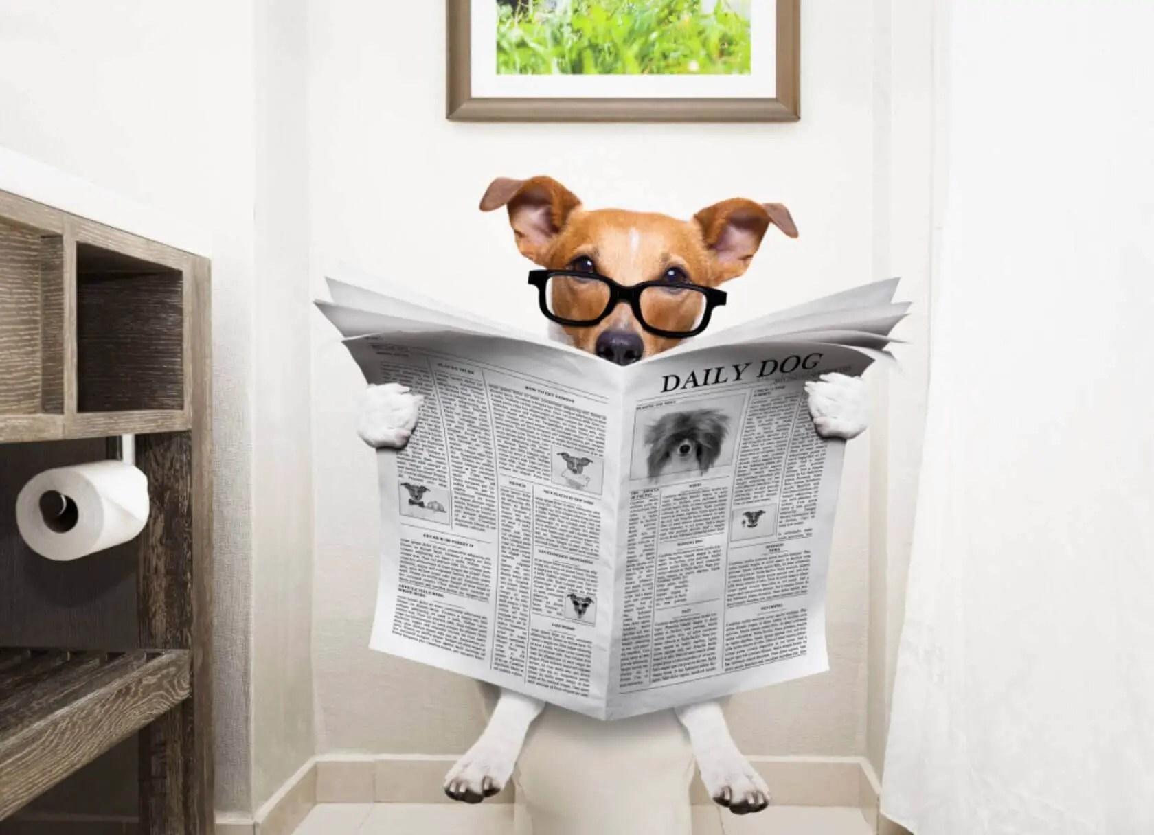 la Guida sulla diarrea nel cane, cause, sintomi, cura, rimedi naturali, cosa fare, cosa non fare - cane sul water a fare i suoi bisogni