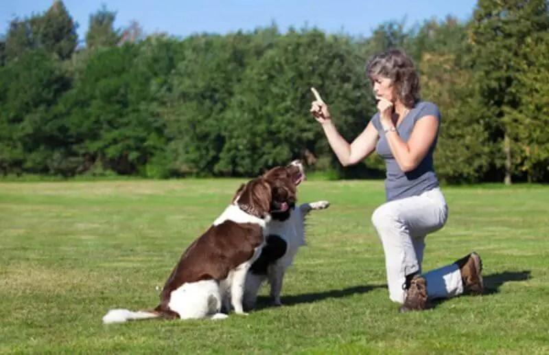 sessione di addestramento del cane con Fischietto ad Ultrasuoni Per Cani