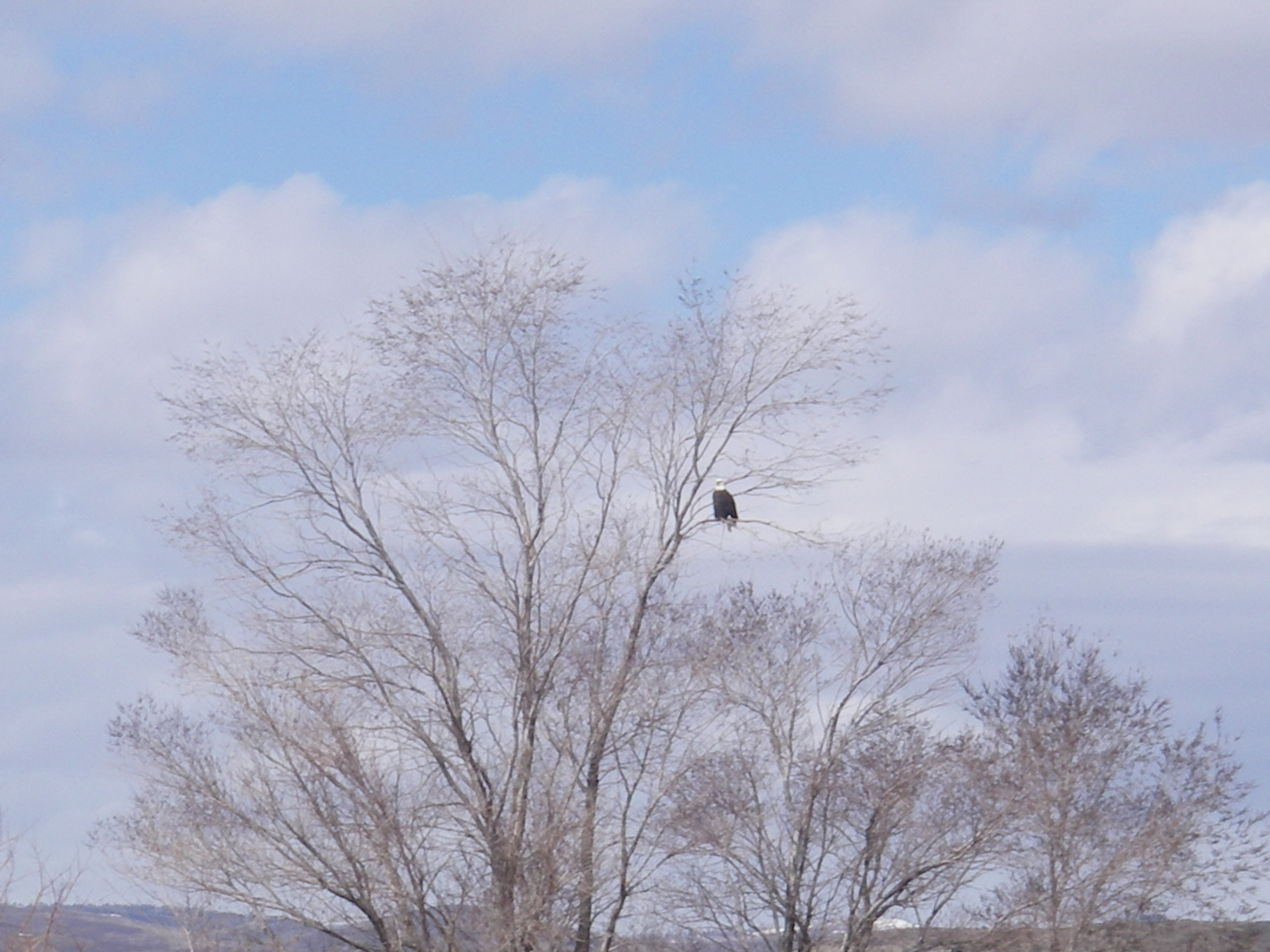 Bald eagles were out and about.