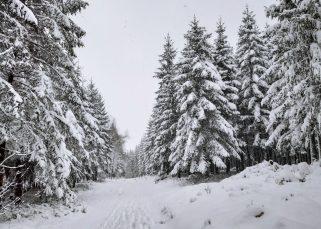Fagnes-Ovifat-Promenade
