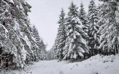 Week-end dans les fagnes : promenade hivernale sous la neige