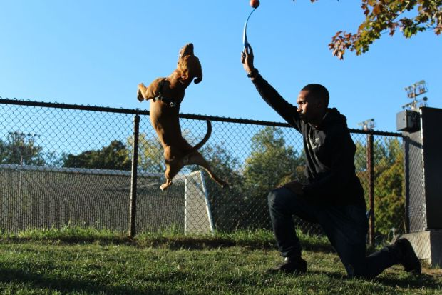 Nathaniel South playing with pit bull Chester as he flips for the ball. Photo by Alex Hutchins.