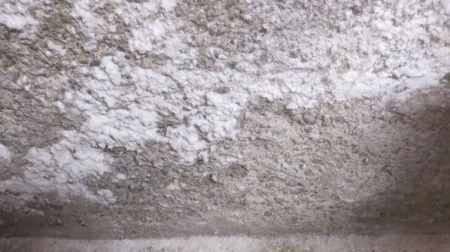 Concrete affected by Fungi