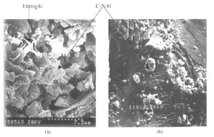 SEM micrograph of GGFAC