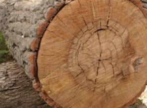 Timber Radial Shakes