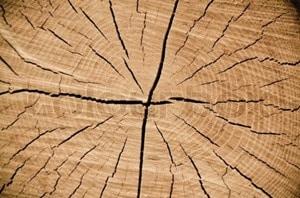 Wind Cracks in Timber