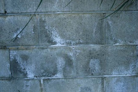 Concrete deterioration by Cation Exchange
