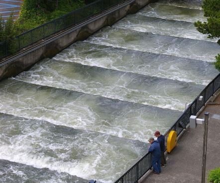 Pool and Weir type Bonneville dam