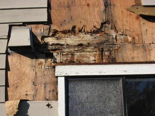 Damages to wood article due to dampness.