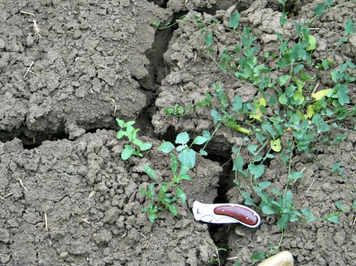 Vertis soils produce wide and deep cracks upon drying