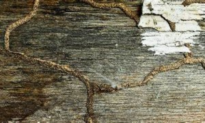 How to Identify Termite Infestation in Buildings?