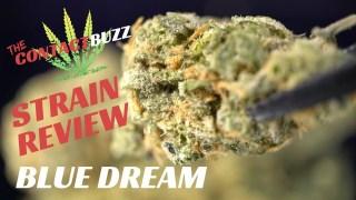 THC Design - Cannabis Cultivation Facility Tour - The Contact Buzz