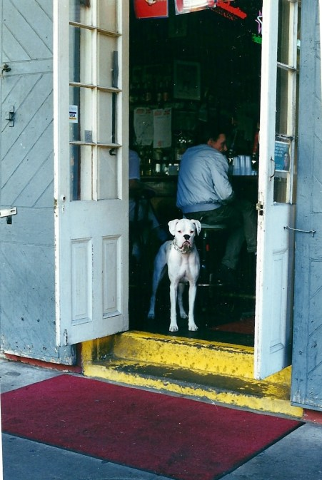 Dog in a Bar (copyright: Laurie Snyder, 1999)