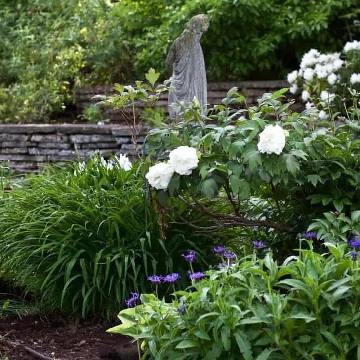 Spring flowerbeds blooming