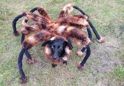 Mutant Spider Dog