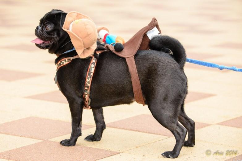 Doggie Costume Contest