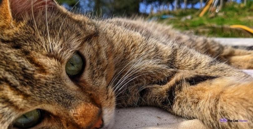 Tabby Cat Names Unisex