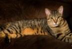 Tabby Cat Names