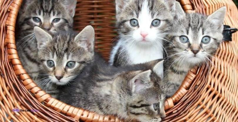 Cute Names for Triplet Kittens