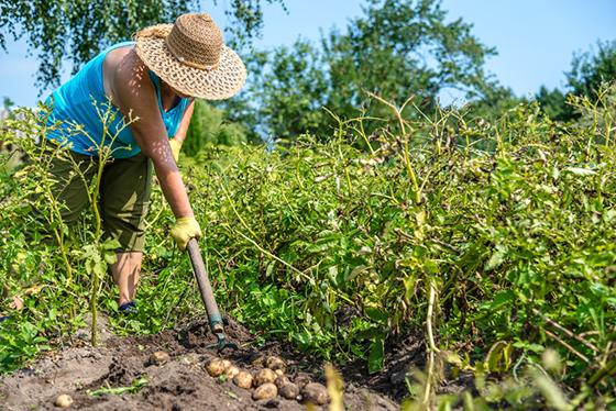 bio farming