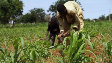 Agriculture is critical for achieving the Sustainable Development Goals