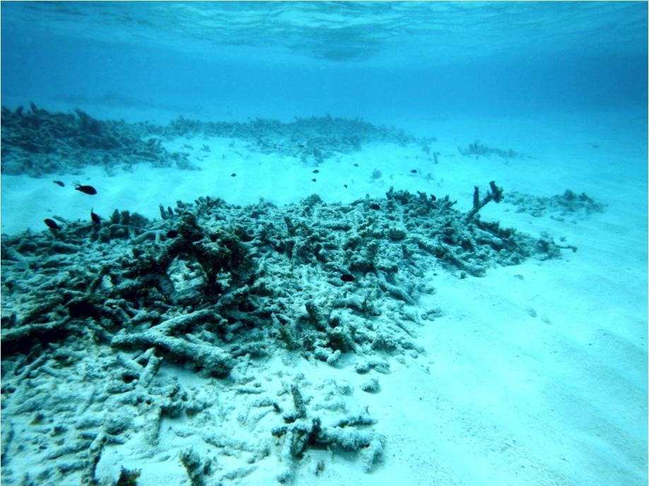 Image result for John McManus, photos, dead coral reefs