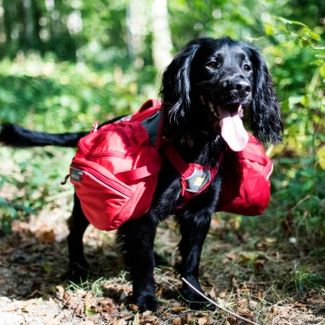 Our Favourite Multi Purpose Dog Products   GIFTED