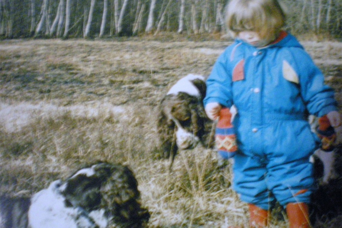 Growing up with Spaniels | The Cornish Dog