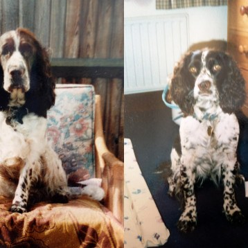 Growing up with Spaniels | I'm Definitely a Dog Person