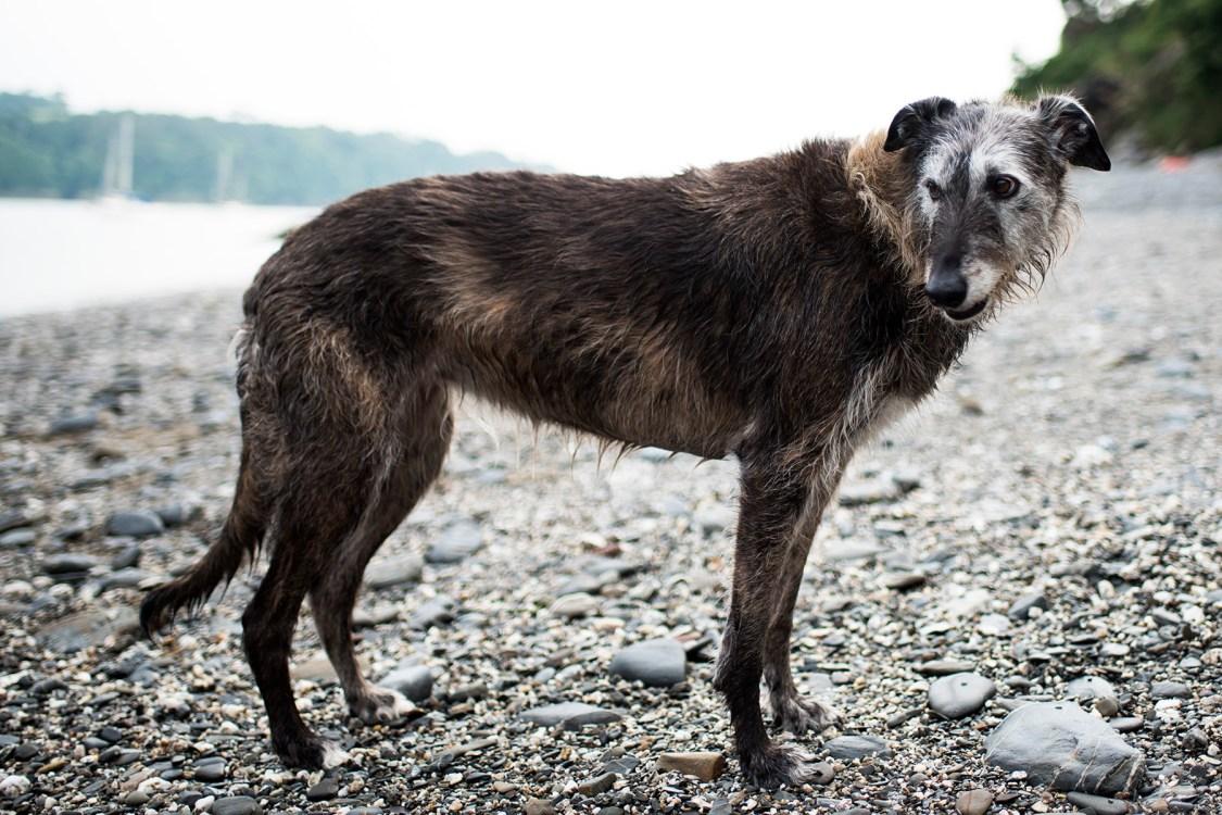 Praise and Paw | The Cornish Dog