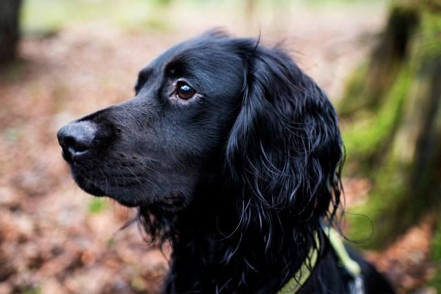 Penrose to Loe Bar | The Cornish Dog