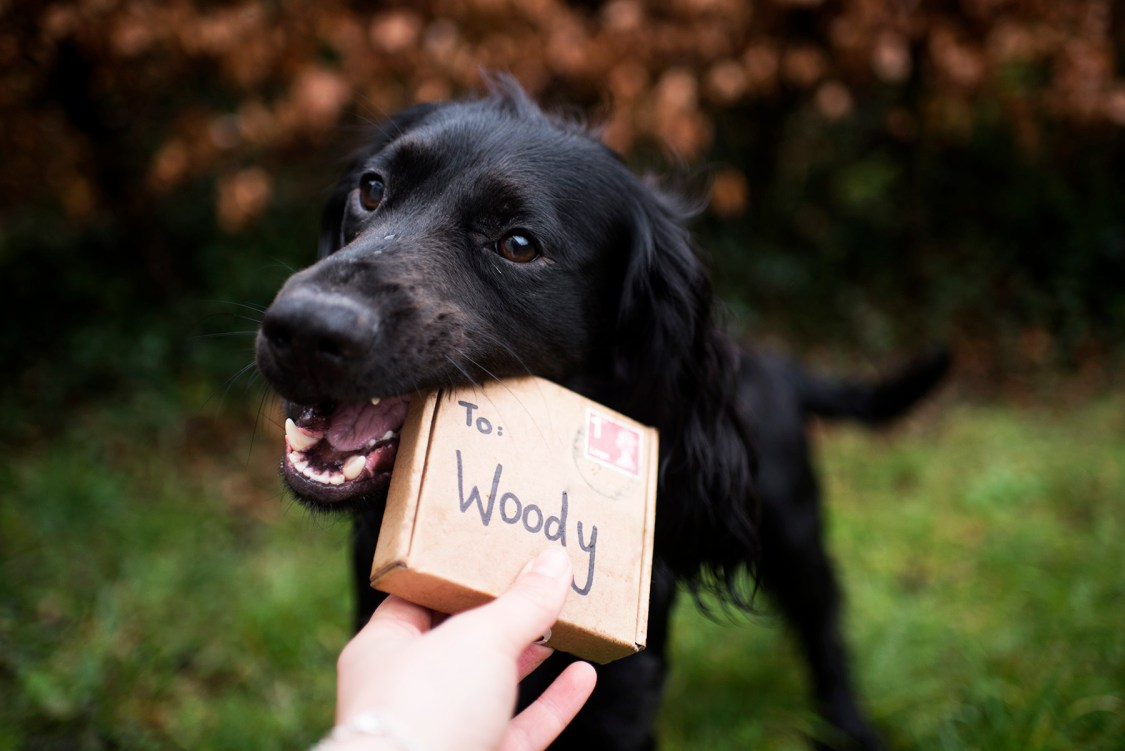 Work With Us | The Cornish Dog
