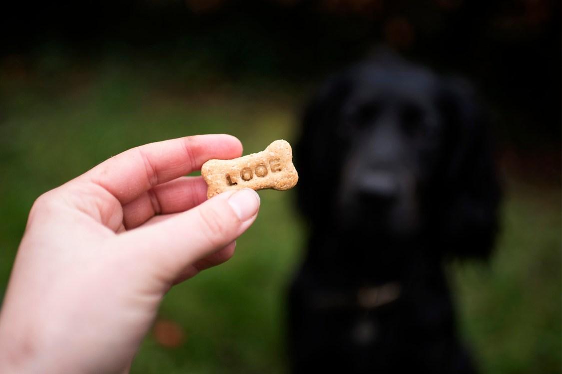 Eat Play Bark | The Cornish Dog