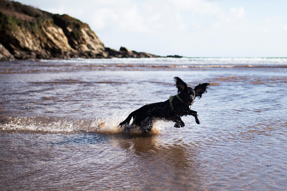 Woody | The Cornish Dog