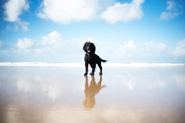 Perranporth Beach   Our Favourite Winter Beaches   The Cornish Dog