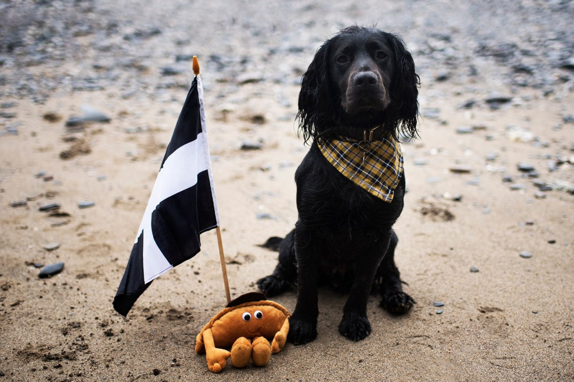 Cornish Bucket List | The Cornish Dog