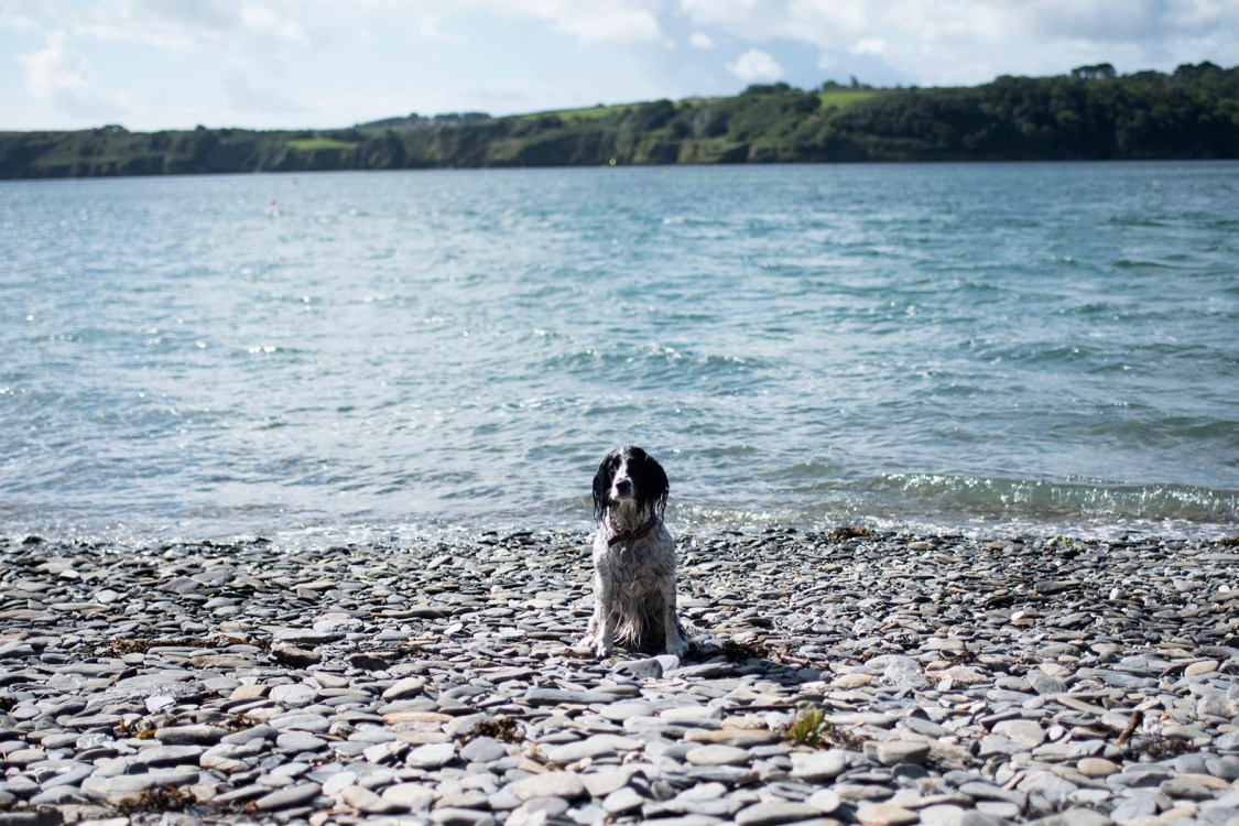 Adventures with Millie | The Cornish Dog